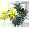 eucalyptus-on.png